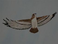 2 foot hawk in the sky