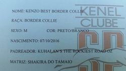Kenzo Best Border Collie - Comprovante de registro. Tera o Pedigree Ofical da CBKC/FCI