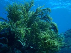 Diving in the Coral Gardens of Dead Chest Island