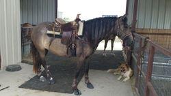 Packing around saddle - 2YO