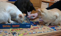 puzzling over a puzzle
