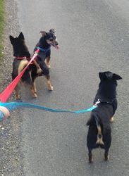 The three of us on a walk