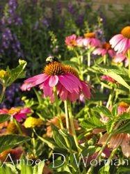 Pollen Harmony