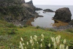 Island Cove, near Bottle Cove