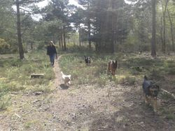 Dog Sitters Crowthorne