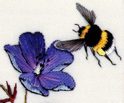 Meadow Cranesbill and Bumble bee