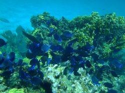 Sandy Cay