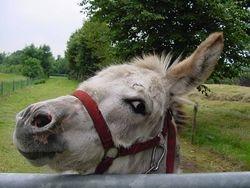 Who is an ass? / Wie is een ezel?