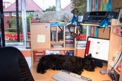 The Boys having a snooze on my desk