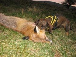 Holly with DEAD fox.