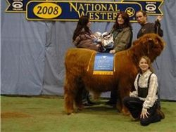 2008 Grand Champion Prospect Steer