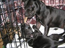 Loki pup & Diva