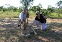 Walking With The Lions - Zimbabwe