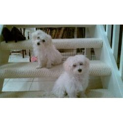 Daisy and Gerber (Two Lucky Pups)