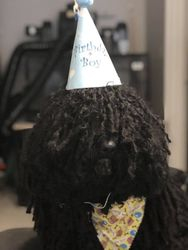 Happy Birthday Nero!