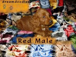 Chelsea's red male