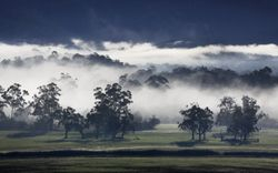 Fog at Worri Yallock 1
