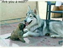 """""""Are you a wolf"""""""