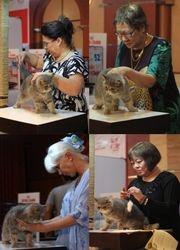 CFA Cat Show