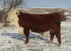 LOT 28  BR 79Y Stanmore 164B