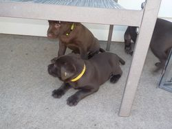 Belle (Yellow) and Ella (Green)