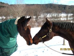 Reacquainted with Baby (Northern Afleet x Repossessed)- also from New Vocations