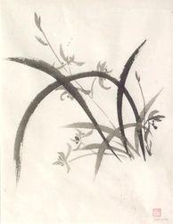 Grass Orchid B