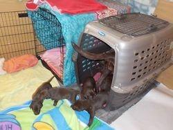 Pups released