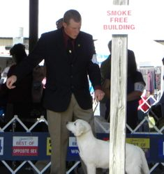Serenes first AKC show