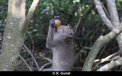 Coconut drinking (Teluk Terima)