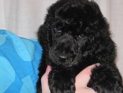 Wilson.  6 weeks old.