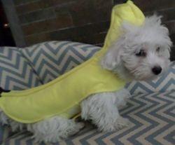 Casper in his Banana Costume
