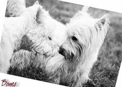 Coco & Charlie