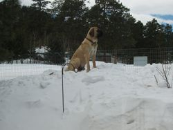 Chuckwagon surveys his kingdom