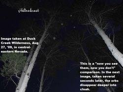 "Tree canopy ""hex"" orbs"