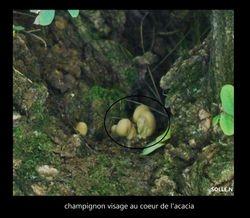 fées des champignons