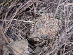 Discover the toad /Ontdek de pad