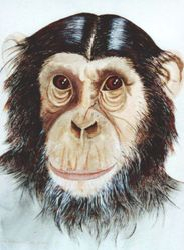 Darwin's Theory I/D 802A