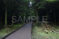 Langlands Moss Boardwalk