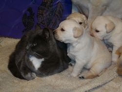 Pearl & Pups
