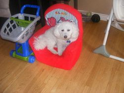 Monte loves this chair!