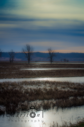 Marsh #1