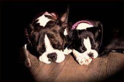 Cowboy & LadyBug