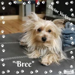"""""""Bree"""""""