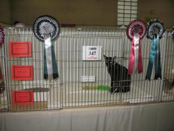 The Notts and Derbys Show 2012