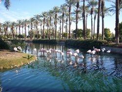 Flamingo's at Marriott Desert Springs Resort Hotel entry...