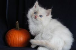 Cream Mitted Baby