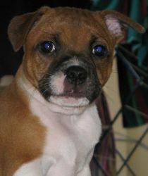 Daisy 9 weeks