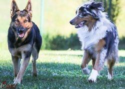 Myka plays with Bandit