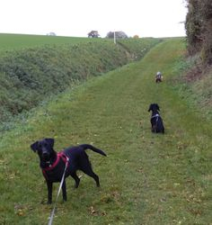 Walking with Tess and Heston